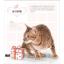 หนังสือสอนระบายสีไม้ ภาพแมว สอนลงสีขน (พร้อมส่ง) thumbnail 6