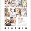 กระดาษดราฟร่างเบา แบบฝึกหัดภาพระบายสี ภาพแมว