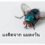 บทความให้แง่คิดเรื่อง แง่คิดจาก แมลงวัน