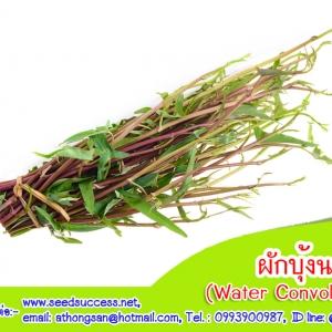 ผักบุ้งจีน (Water Convolvulus) / 10 กรัม