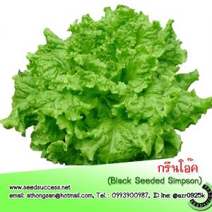 ซองใหญ่ (Bigpack)--กรีนโอ๊ค (Green Oak Black Seed Simpson) / 5 กรัม