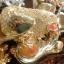 ปลาหลี่ฮื้อเกล็ดเหรียญทองพ่นน้ำโชคลาภ เหลือกินเหลือใช้ thumbnail 3