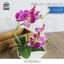 ต้นไม้ปลอม ต้นไม้แต่งบ้าน ดอกไม้พลาสติก ต้นไม้พลาสติก ดอกไม้ประดิษฐ์ (ต้นกล้วยไม้) ขนาด 14x6x22 CM. thumbnail 3