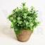 ต้นไม้ปลอม ต้นไม้แต่งบ้าน ดอกไม้พลาสติก ต้นไม้พลาสติก ดอกไม้ประดิษฐ์ (เซ็ต 3 ชิ้น) ขนาด 9x7x22 CM. รุ่น B62-GG3-18X8.5X7.5 thumbnail 3