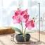 ต้นไม้ปลอม ต้นไม้แต่งบ้าน ดอกไม้พลาสติก ต้นไม้พลาสติก ดอกไม้ประดิษฐ์ (ต้นกล้วยไม้) ขนาด 9.5x8x19 CM. thumbnail 2