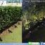 ไฟปักสนาม สปอตไลท์ โซลาร์เซลล์ รุ่น Super Bright 4 LED thumbnail 6