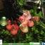 โคมไฟกระพริบ โซล่าเซลล์ รุ่น พรีเมียมใหญ่ หลากสี thumbnail 1